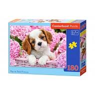Puzle Castorland  180 B-018185 PUP IN PUNK FLOWERS