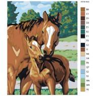 Glezna pēc numuriem - Zirgi 30x40 KRYM-AN06